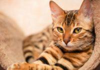 6 pārsteidzoši fakti par kaķiem