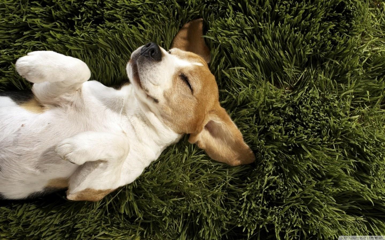 dog-puppy-pretty-sweet-9924-1440x900