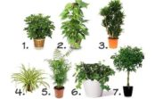 Istabas augi, kas attīra gaisu telpās; Veids, kā uzlabot veselību