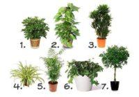 Istabas augi, kas attīra gaisu telpās