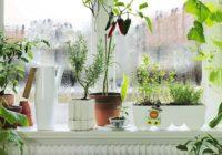 Dārziņš uz palodzes