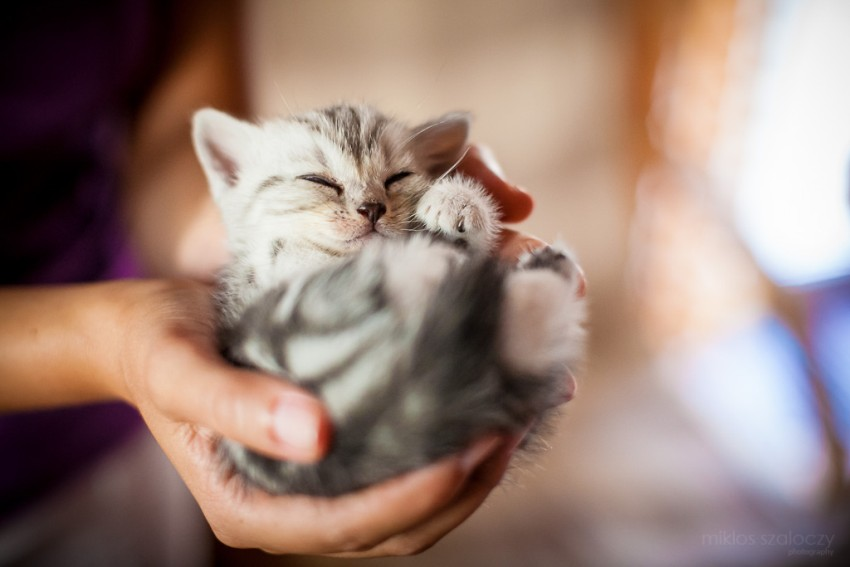 29.-A-handful-of-smile