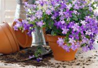 Agrs pavasaris – piemērotākais laiks telpaugu pārstādīšanai. Kā to vislabāk darīt?