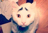 Interneta hīts – visbēdīgākais kaķis pasaulē
