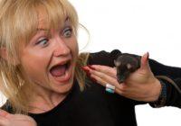 Kāpēc sievietes baidās no pelēm