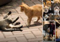 9 vietas, kuras patiks kaķiem