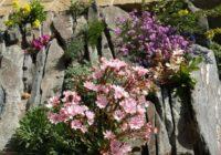 Kas darāms dārzā no 18. līdz 25. maijam