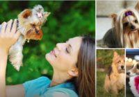 8 suņu sķirnes, kas neizraisa alerģiju