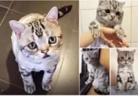 Īgnais kaķis ir pagātne! Ir atrasts pasaules SKUMJĀKAIS kaķis!