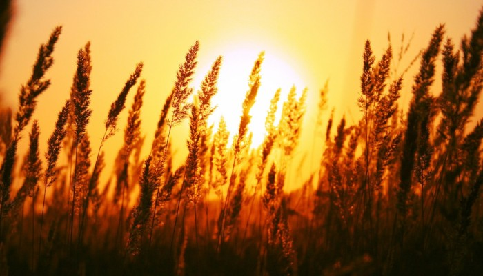 Sun-Rise-1800x2880-700x400