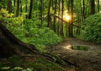 Paņemt mobilo telefonu, neiet zem lieliem kokiem zibens laikā… – Padomi drošam gājienam mežā