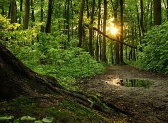 mežs-vecs-mežs-664x442