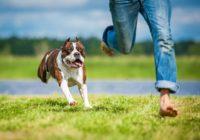 Noskaidrots, ko suņi domā par saviem saimniekiem