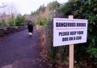 Mistika! Suņu pašnāvību tilts, vismaz 50 suņi miruši