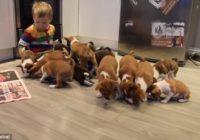 Video: mīļuma pārpilnība – kā ir dzīvot kopā ar 16 kucēniem?