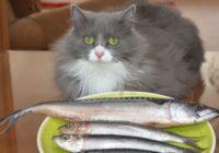 Munčkina: kaķis, kuram ir alerģija no būšanas par kaķi – kā tas iespējams?