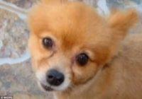 Cilvēku nežēlestībai nav robežu – pretekļi mocījuši mazu suni un atstājuši zīmīti