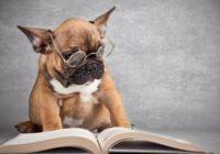 Smieklīgs suns nozog saimnieka brilles – ko viņš ar tām izdara?