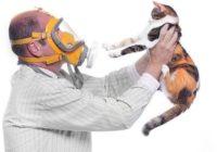 Kā sadzīvot ar alerģiju pret mājdzīvniekiem