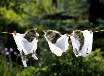 Funny-Animals-animal-humor-29016369-1024-768