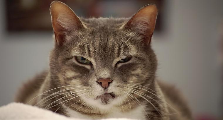 kaķis