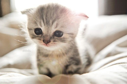 Extremely-cute-kitten_large