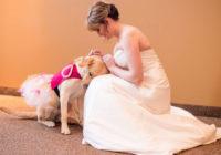 Neticami skaista kāzu bilde, kas aizkustina ikviena sirdi