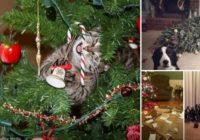 Kaķi, suņi un viņu lielākais ienaidnieks – Ziemassvētku eglīte