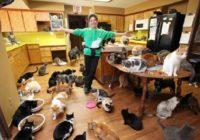 Pasaulē atzītā kaķu sieviete dzīvo treilerī, bet viņas 1000 kaķi lielā mājā