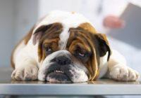 Arī mājdzīvnieki cieš no stresa un depresijas. Uzzini, kā viņiem palīdzēt!