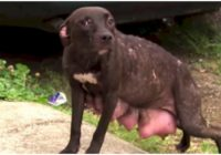 Aizkustinoši – paskaties, ko dara šis suns, kad satiek savus glābējus!