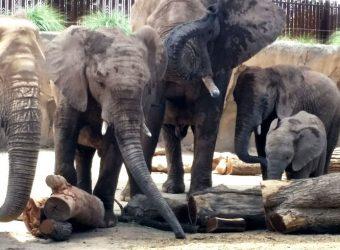 1469810653-landscape-1469713584-elephant-zoo