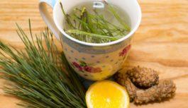 Priežu skuju tēja – gan aukstā, gan siltā! Sena recepte: lieliska veselībai