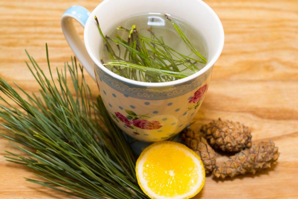 Priežu skuju tēja