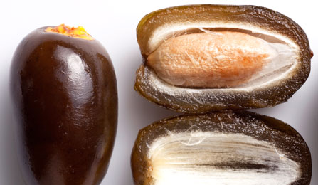 dates-the-healthiest-fruit-on-this-planet-that-can-cure-many-diseases2