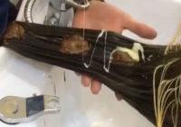 Lūk, kādu matu krāsu var iegūt, tos krāsojot ar Nutellu – pilnīgi neticami!