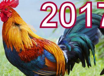 Rooster in field