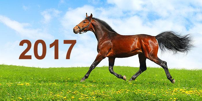 equestrian06