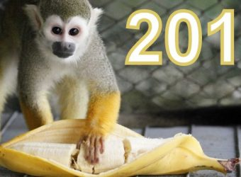 monkey-zoo-banana