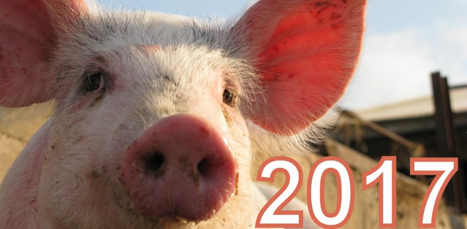 Happy pig on pig farm; Shutterstock ID 25509910; PO: aol; Job: production; Client: drone