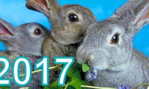 small_animals_rabbit03