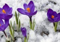 Nedēļas horoskops no 27. februāra līdz 5. martam – uzzini savas veiksmīgās dienas!