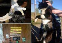 5 neticami gadījumi, kad policija par nozieguma pastrādāšanu arestēja dzīvniekus!