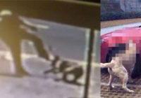 Vīrietis iespēra sunim, kurš gulēja viņa auto stāvvietā: suns vēlāk atgriezās un izdarīja ŠO! Karma tiešām darbojas!