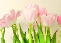 Sieviešu horoskops nedēļai no 20. līdz 26. martam