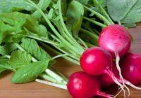 Redīsi veselībai: Lūk, kā to lietošana uzturā uzlabo tavu veselību