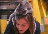 7 iemesli, kādēļ kaķiem patīk jūsu galva – šādus faktus vēl nebūsi dzirdējis!