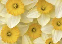Nedēļas horoskops no 13. līdz 19. martam – uzzini savas veiksmīgās dienas!