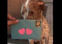 Sievietes bijušais vēl joprojām sūta viņu sunim apsveikumus dzimšanas dienā – aizkustinošs stāsts!