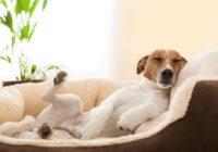 Eksperti uzzinājuši, par ko sapņo suņi – cilvēki par to izplūst asarās